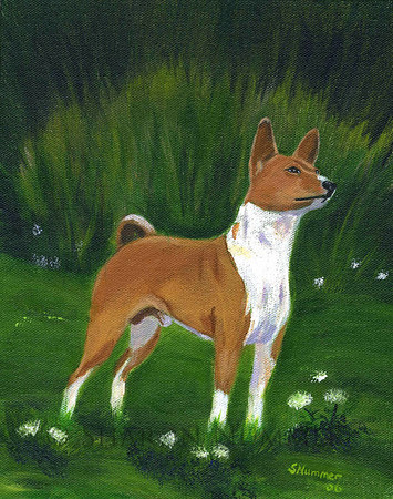 """""""Portrait of A Basenji""""  © 2006    By Sharon Nummer Acrylic on Canvas  Original painting sold."""