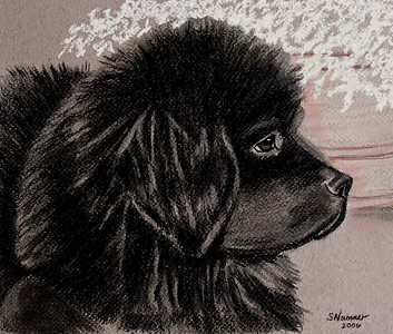 """""""Baby Newfie""""  © 2006  Sharon Nummer  Charcoal Drawing on Tiziano paper.  This is one piece I wish I hadn't sold.  This is one of my very favorite pieces.  The Newfie puppy is my little boy, Watson.  I took the photo from which this drawing was created when he was 12 weeks old. I have reproduced this drawing on a variety of merchandise.  Looks lovely on a ceramic tile."""