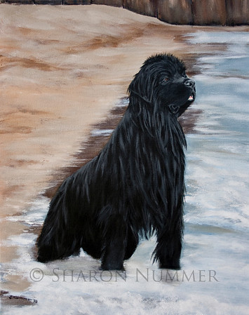 """""""Beach Patrol""""  © Sharon Nummer  Acrylic on Gallery wrap canvas. The original is in a private collection.  Prints available. This painting is a reminder of a beautiful day spent with my Newf, Watson on a very small beach on Lake Michigan.  Watson is watching all the swimmers.  His concern is so evident on his face.  He swam out to each person and herded them to shore.  Watson was following the natural instincts of a Newfoundland dog..to rescue swimmers."""