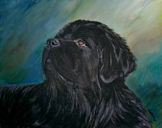 """""""Young Newfoundland""""  © 2007  Sharon Nummer Watercolor on Strathmore  Cold Press Illustration Board  Here is a painting I can't sell.  The Newfoundland is my boy, Watson at 2 years old.  His gentle and intelligent expression is so dear to my heart.  Prints, cards, and other items available."""