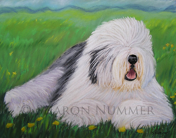 """""""Summer Afternoon""""  ©  Sharon Nummer Pastel on Paper  Old English Sheepdogs are one of my favorite breeds to paint.  This beautiful dog was waiting to go into the ring.  I loved the colors of his coat, particularly the black flecks on his head.  I wanted to bring out the textures of his coat using pastels.    The original painting is sold."""